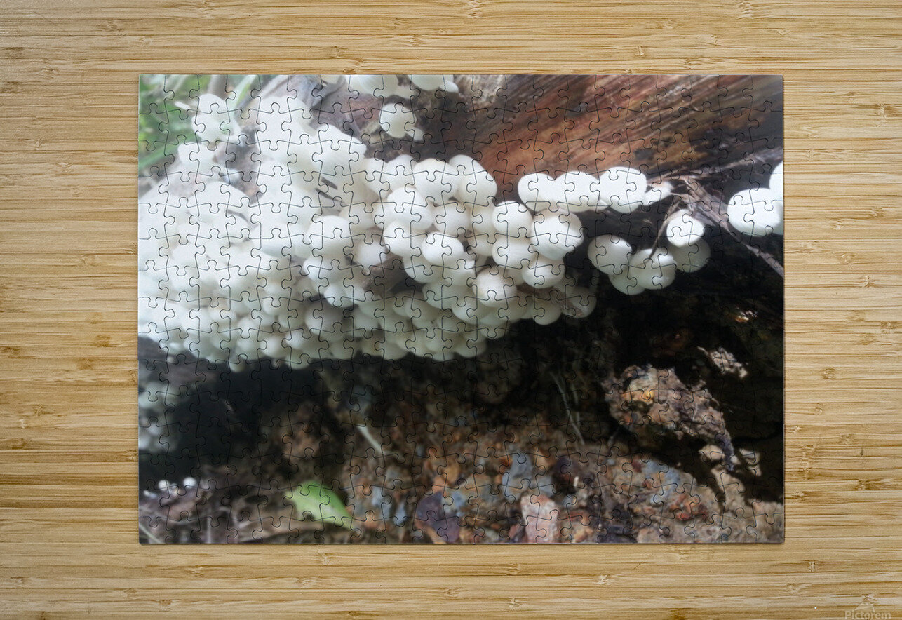 white mushrooms  HD Metal print with Floating Frame on Back