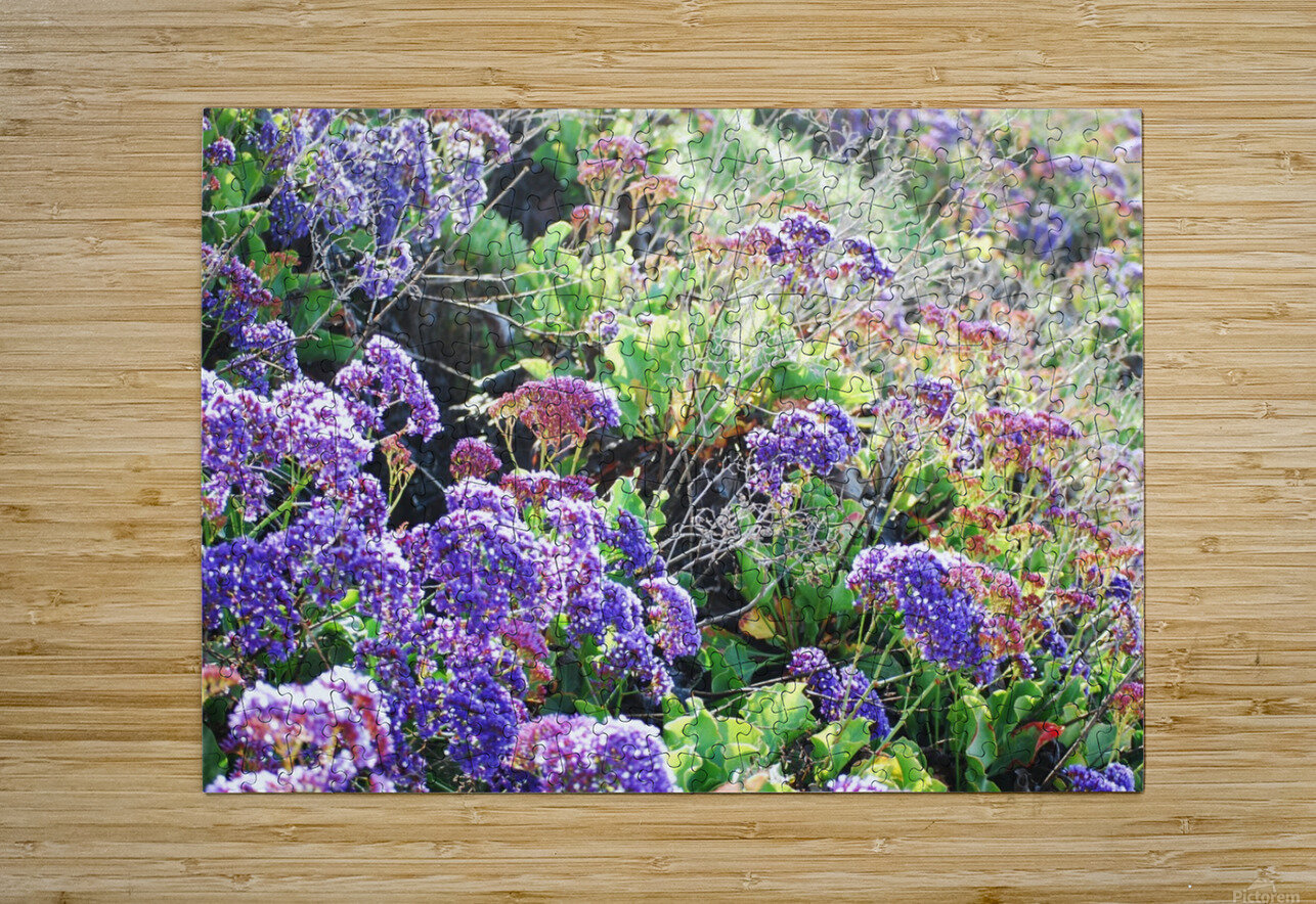 Purple Wild Flowers in Dana Point CA  HD Metal print with Floating Frame on Back