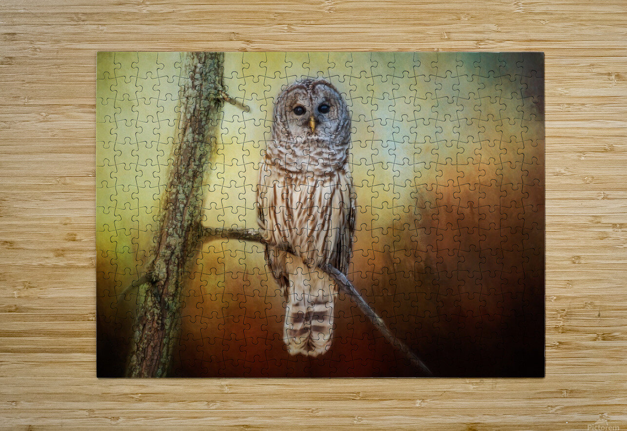 Barred Owl at sunrise with Textures  HD Metal print with Floating Frame on Back
