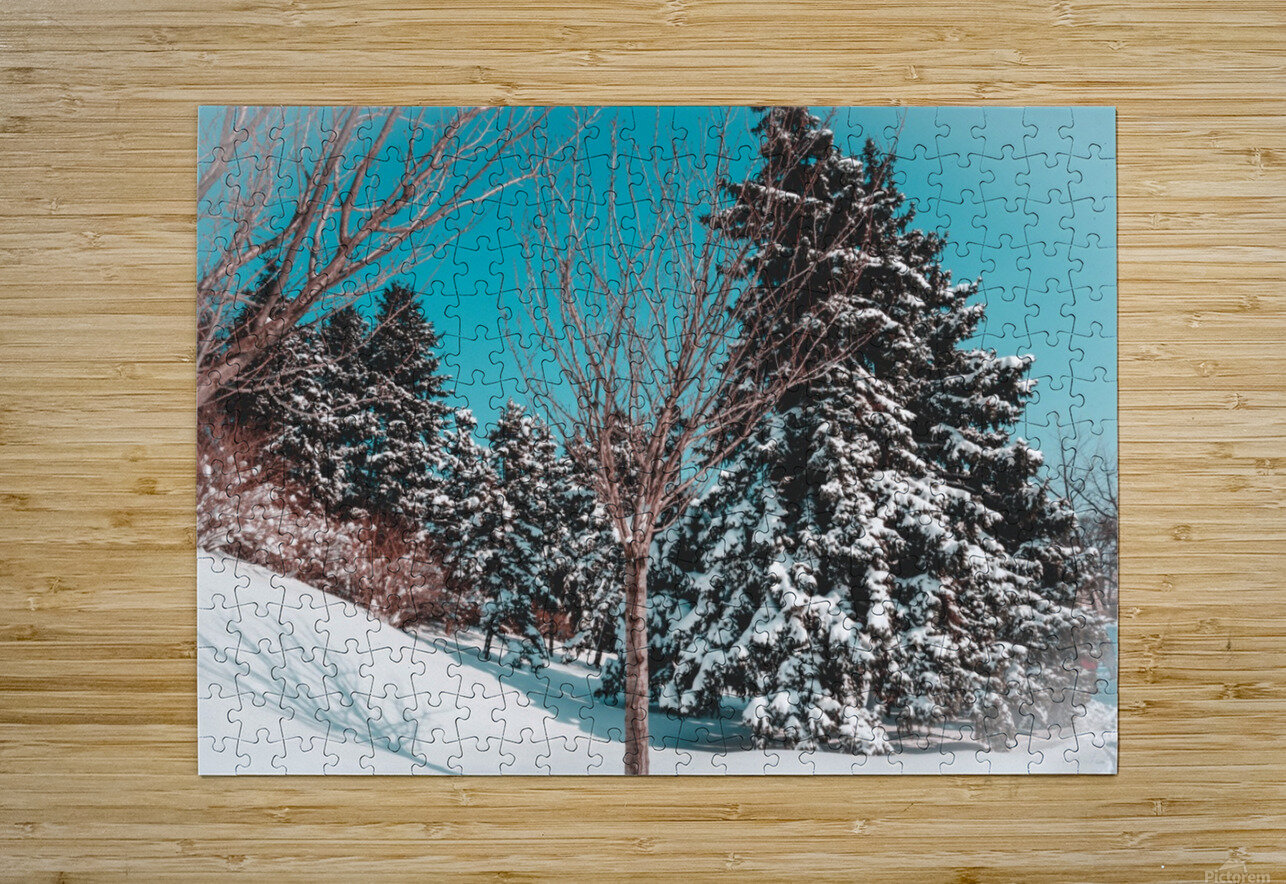 Snowy Pine Trees  HD Metal print with Floating Frame on Back