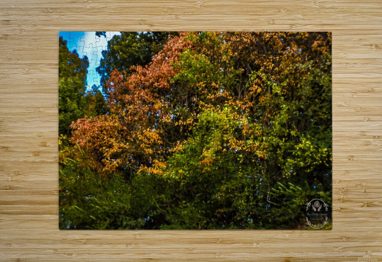 Nature in Fall  HD Metal print with Floating Frame on Back