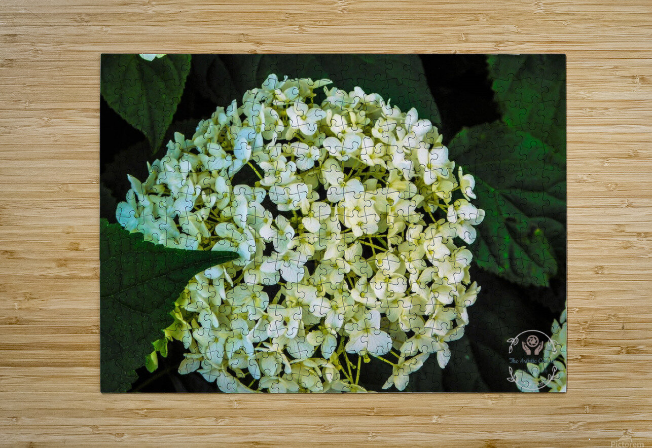 White Perfection  HD Metal print with Floating Frame on Back