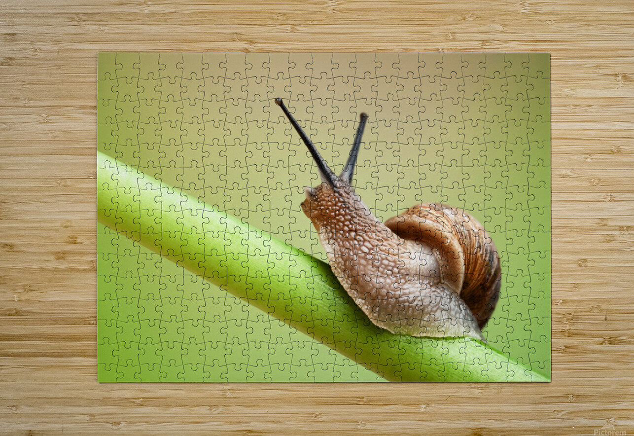 Snail on green stem  HD Metal print with Floating Frame on Back