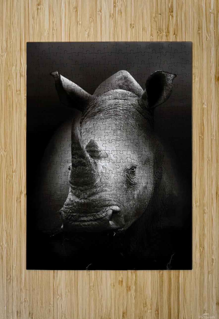 Rhinoceros portrait  HD Metal print with Floating Frame on Back