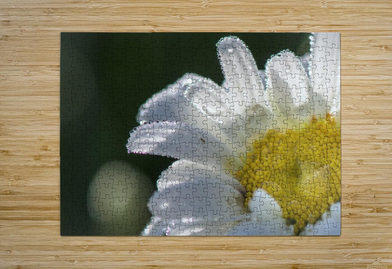 Blancheur de la rosee  HD Metal print with Floating Frame on Back