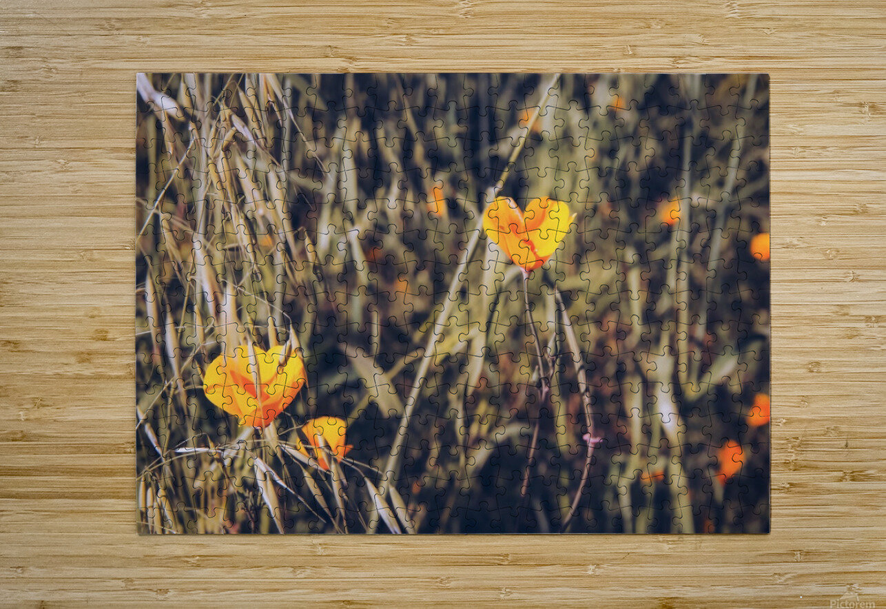 yellow poppy flowers with green leaves texture background  HD Metal print with Floating Frame on Back