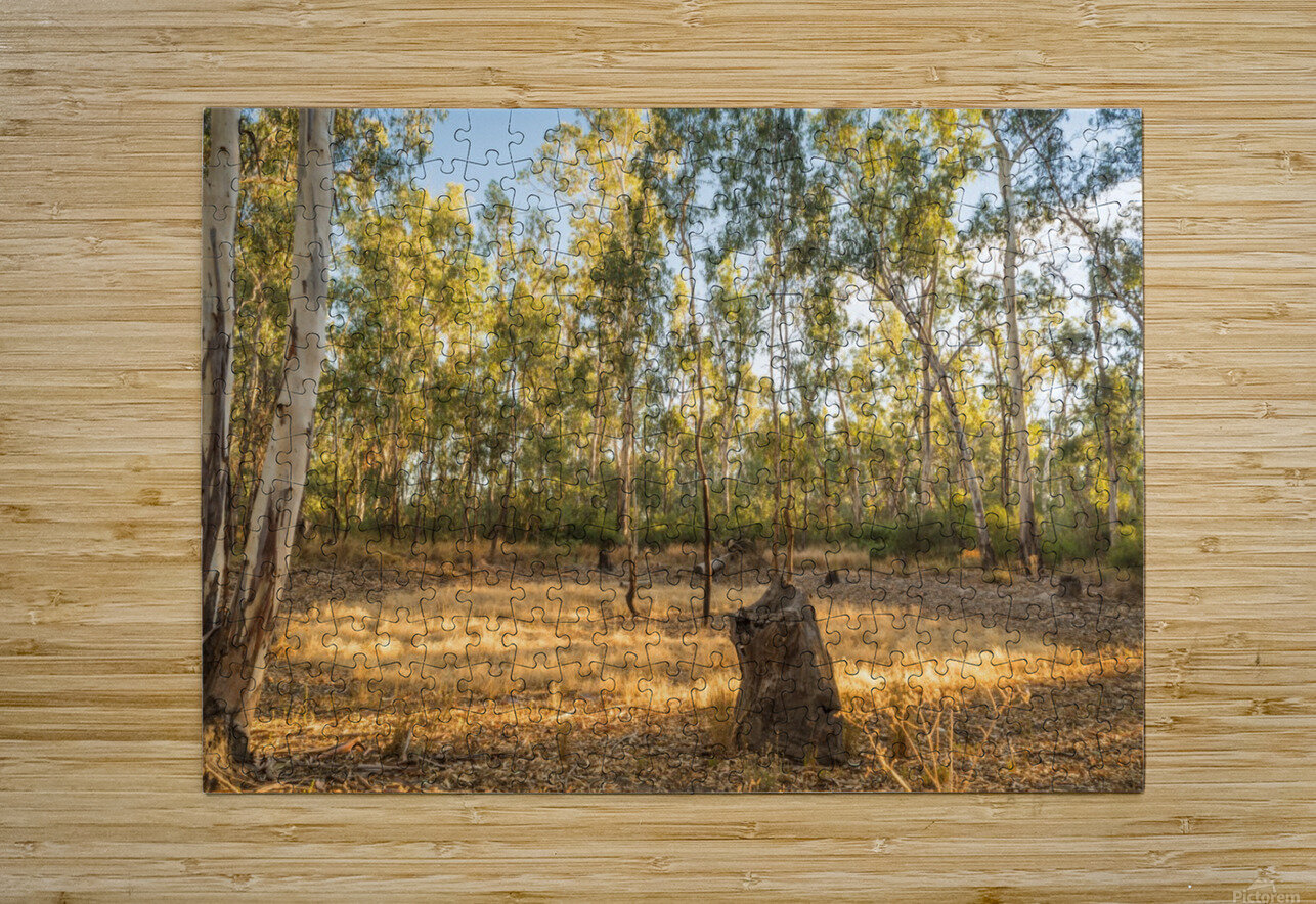 Magic forest circle  HD Metal print with Floating Frame on Back