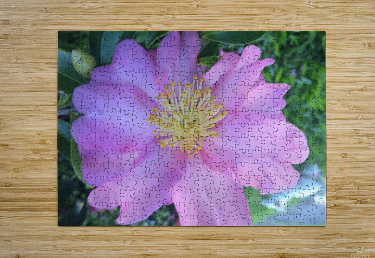 LOTUS DREAMING  HD Metal print with Floating Frame on Back