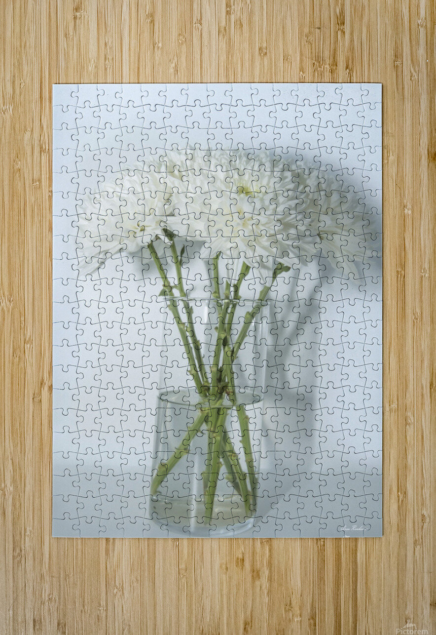 Mum Flower in a Vase  HD Metal print with Floating Frame on Back