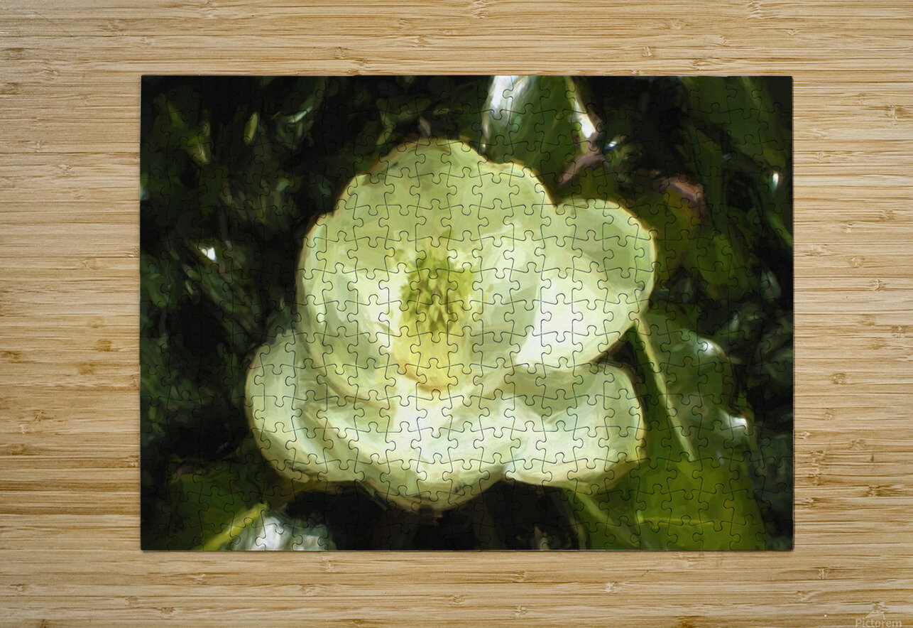 Magnolia  HD Metal print with Floating Frame on Back