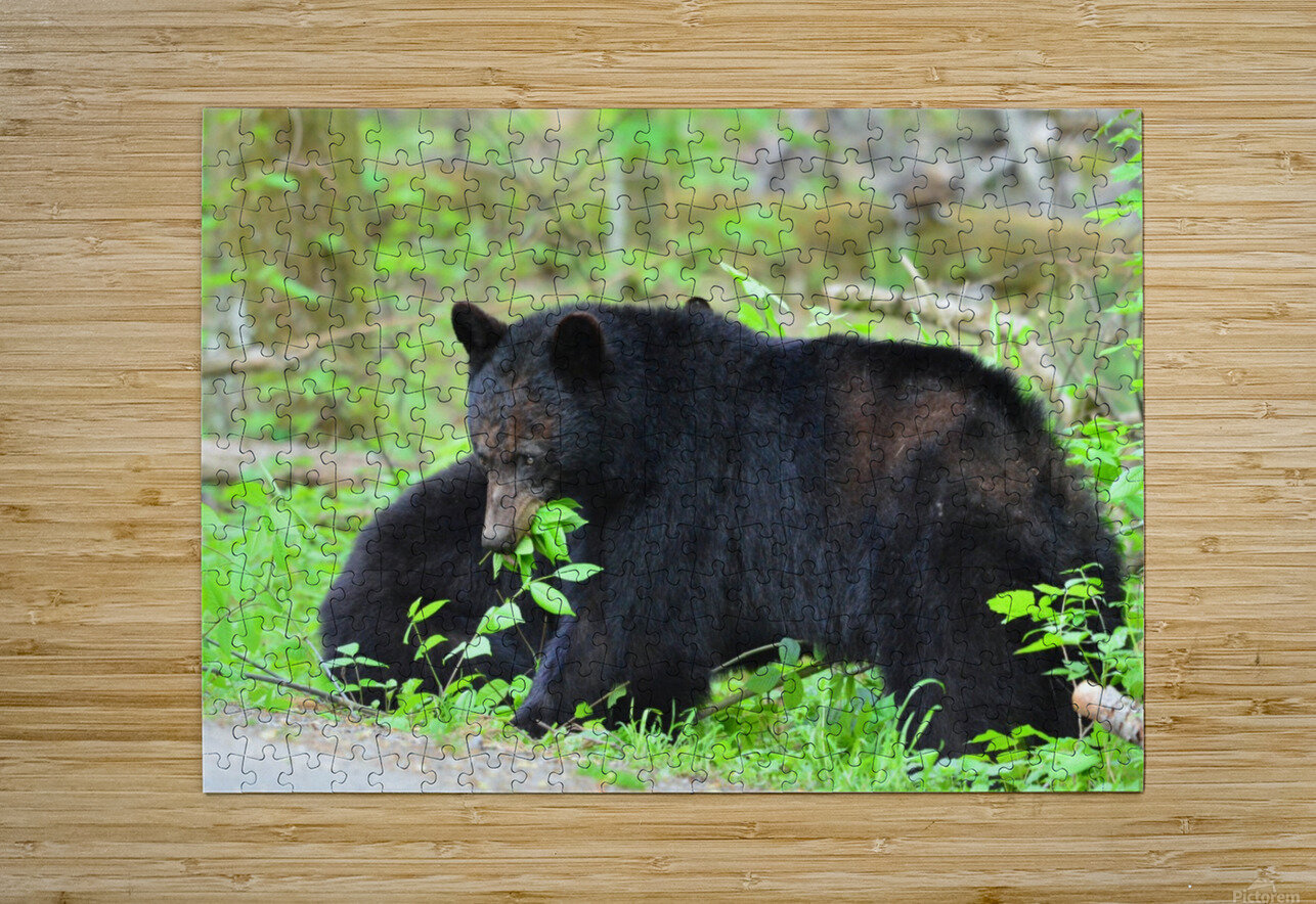 3415-Meal Break  HD Metal print with Floating Frame on Back