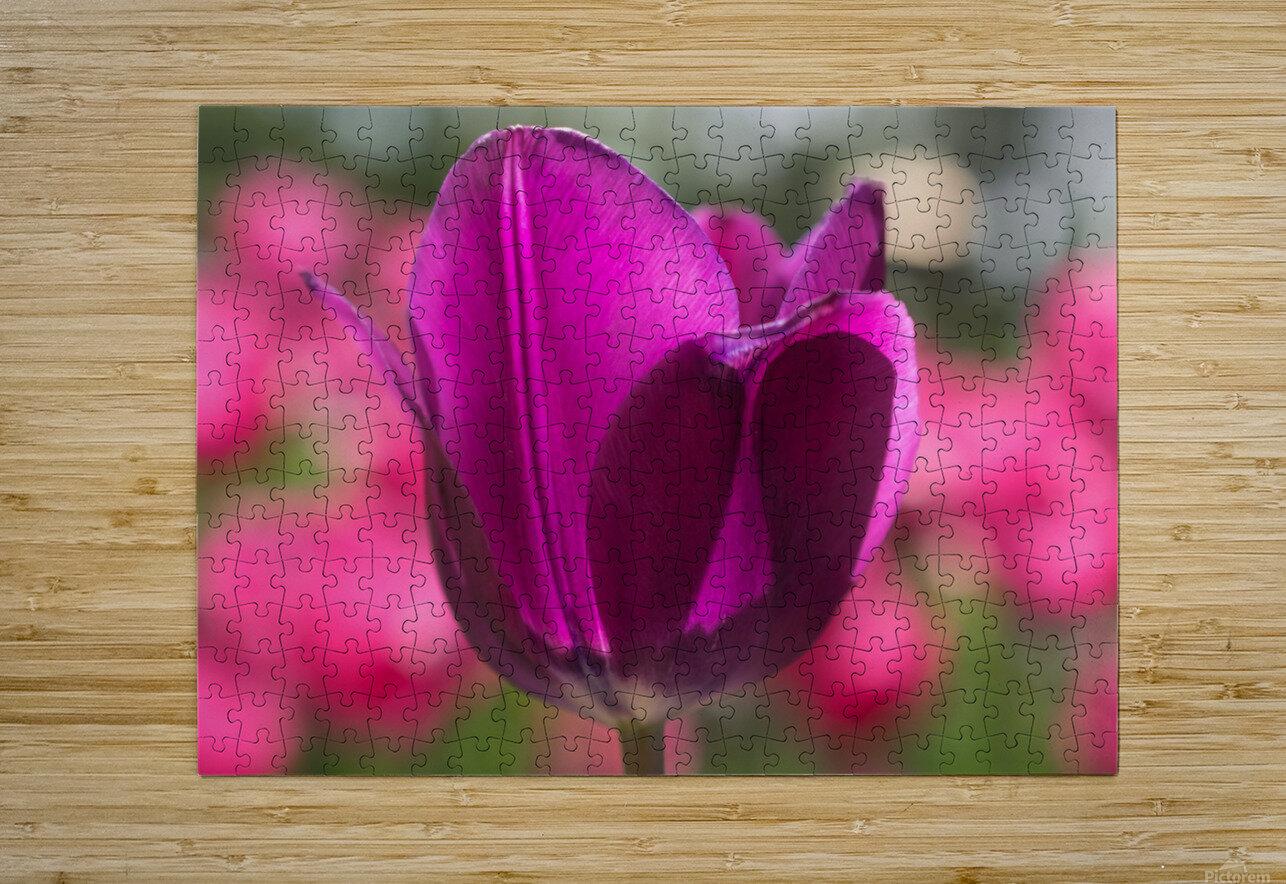 Violet - Violette  HD Metal print with Floating Frame on Back