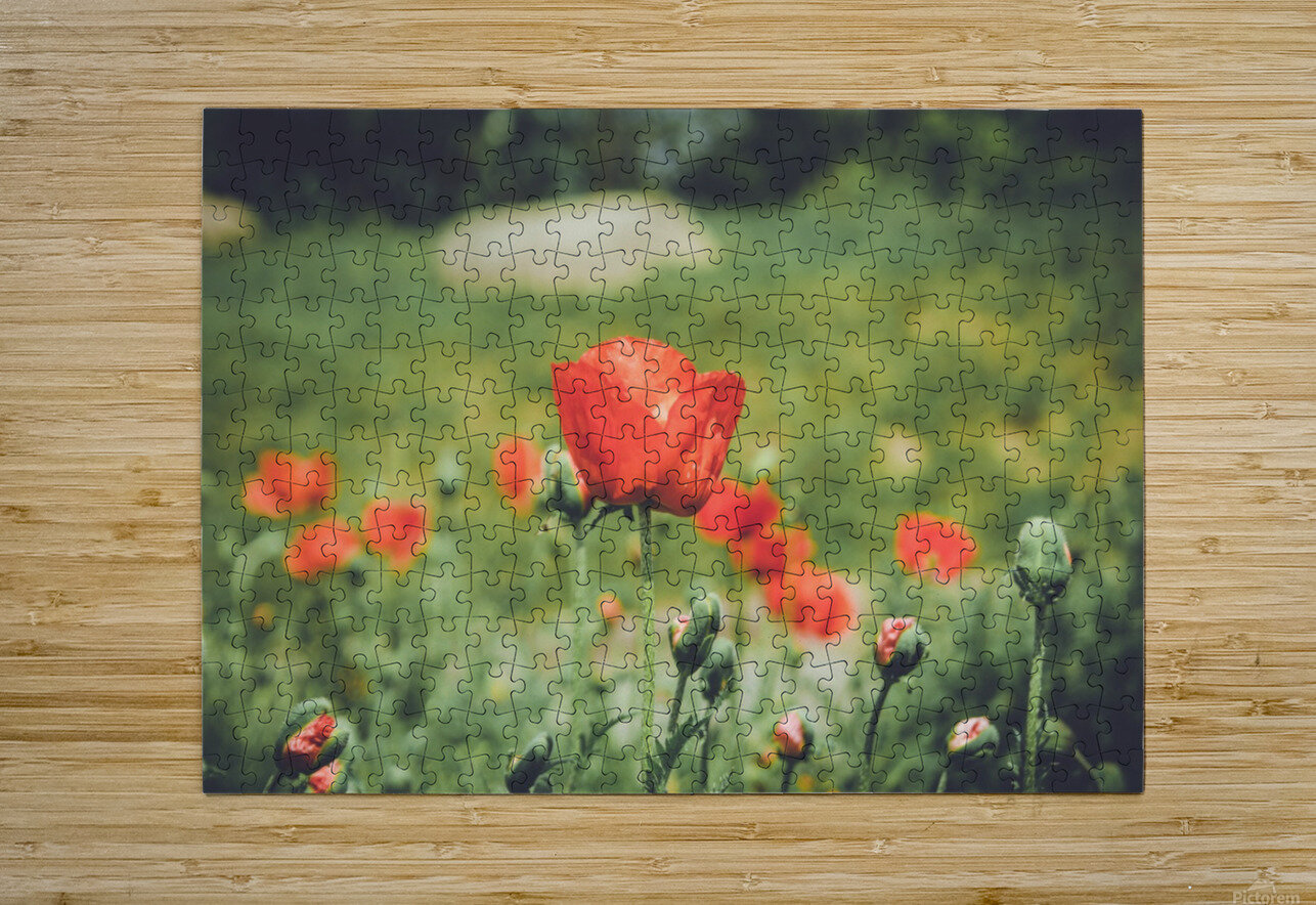 Field of Poppies  HD Metal print with Floating Frame on Back