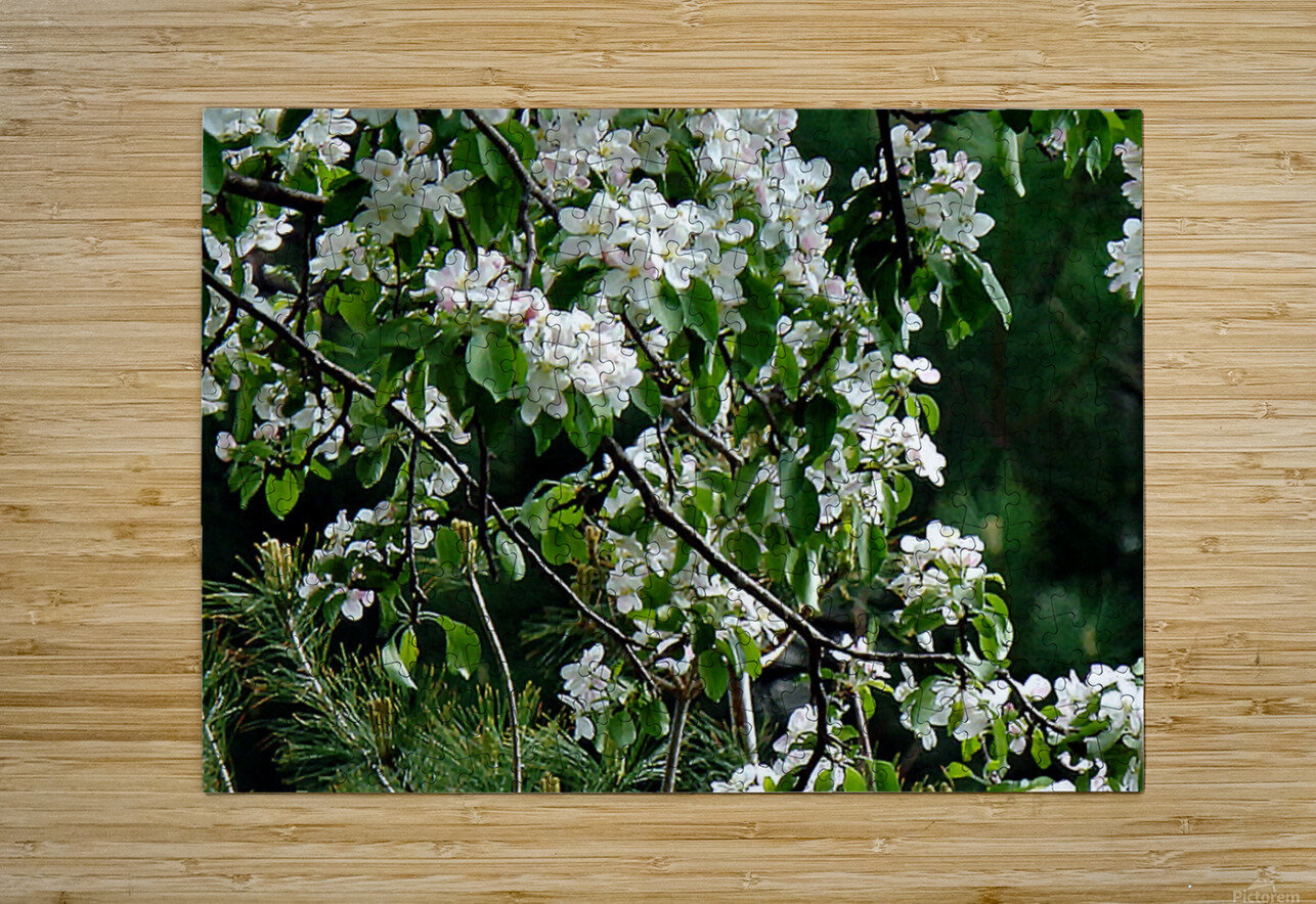 DazzleBlossoms  HD Metal print with Floating Frame on Back