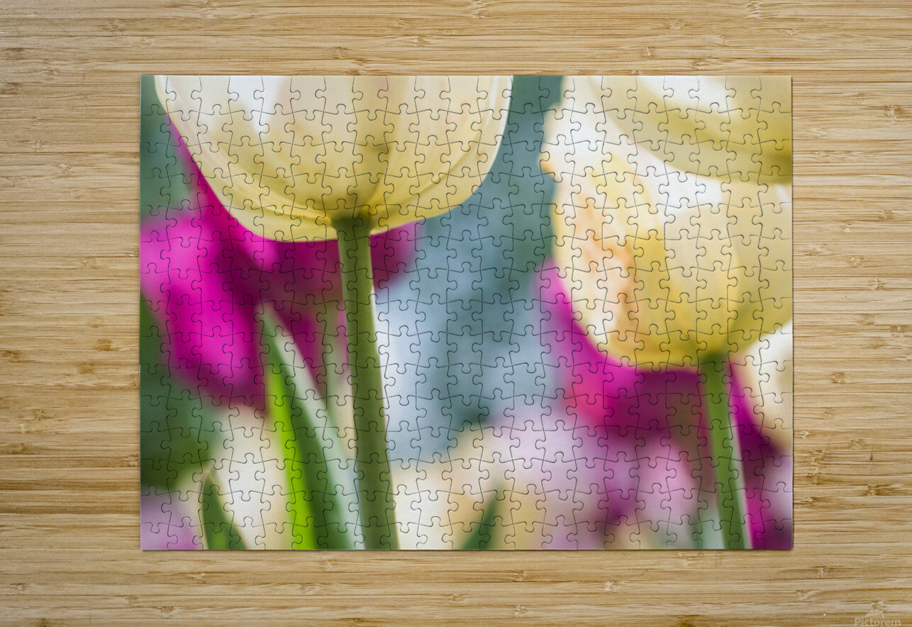 Under The Tulips - Sous Les Tulipes  HD Metal print with Floating Frame on Back