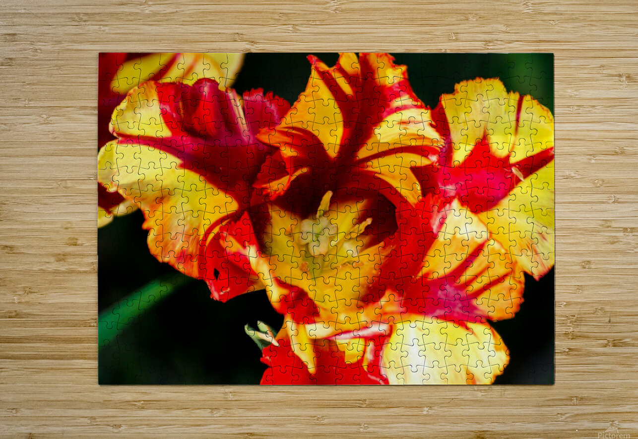 Tulip in Fringed Dress  HD Metal print with Floating Frame on Back