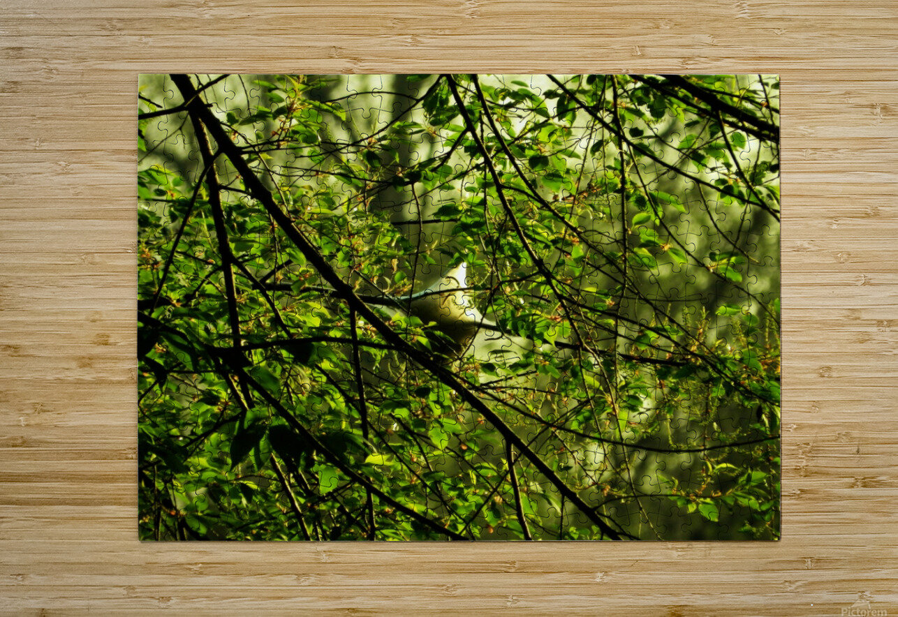 B (2)  HD Metal print with Floating Frame on Back
