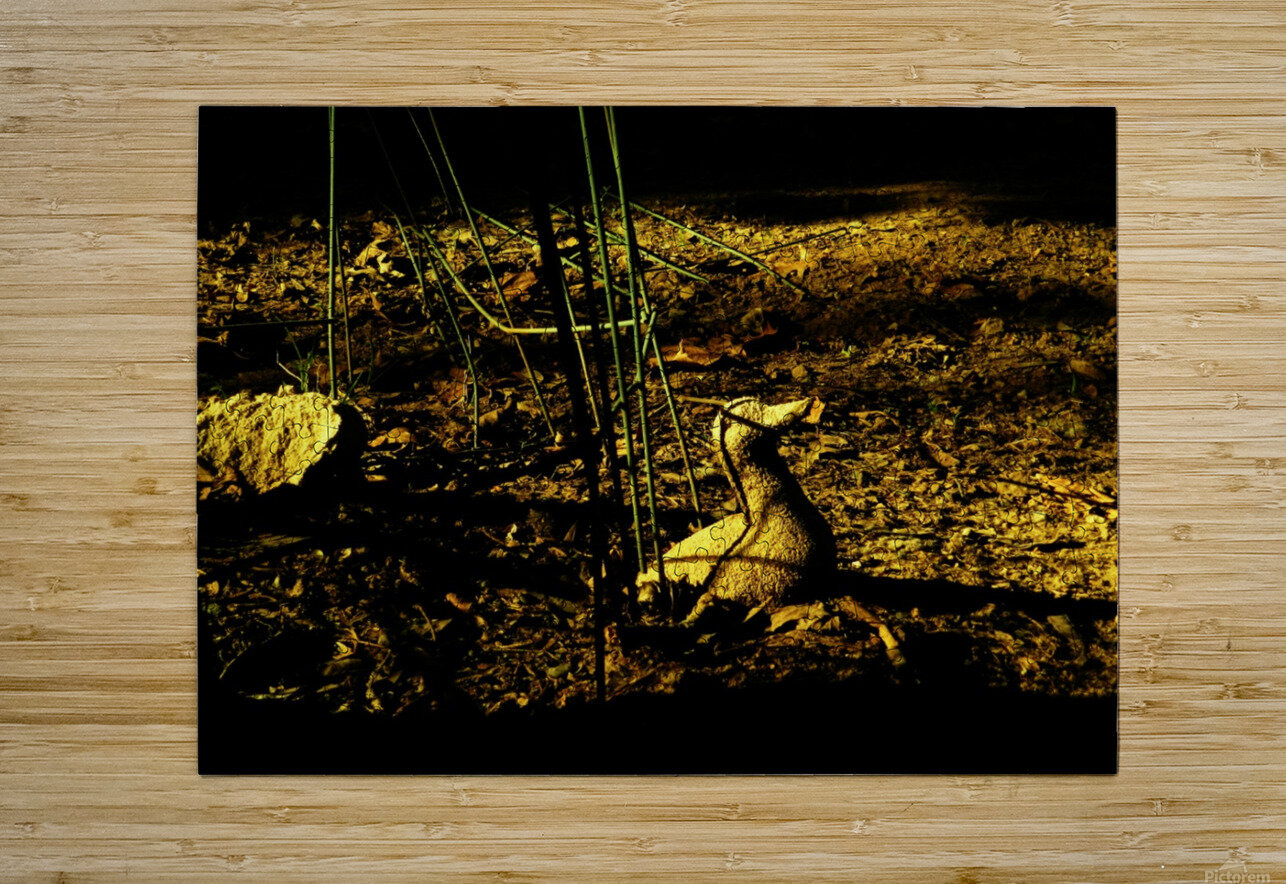D (2)  HD Metal print with Floating Frame on Back