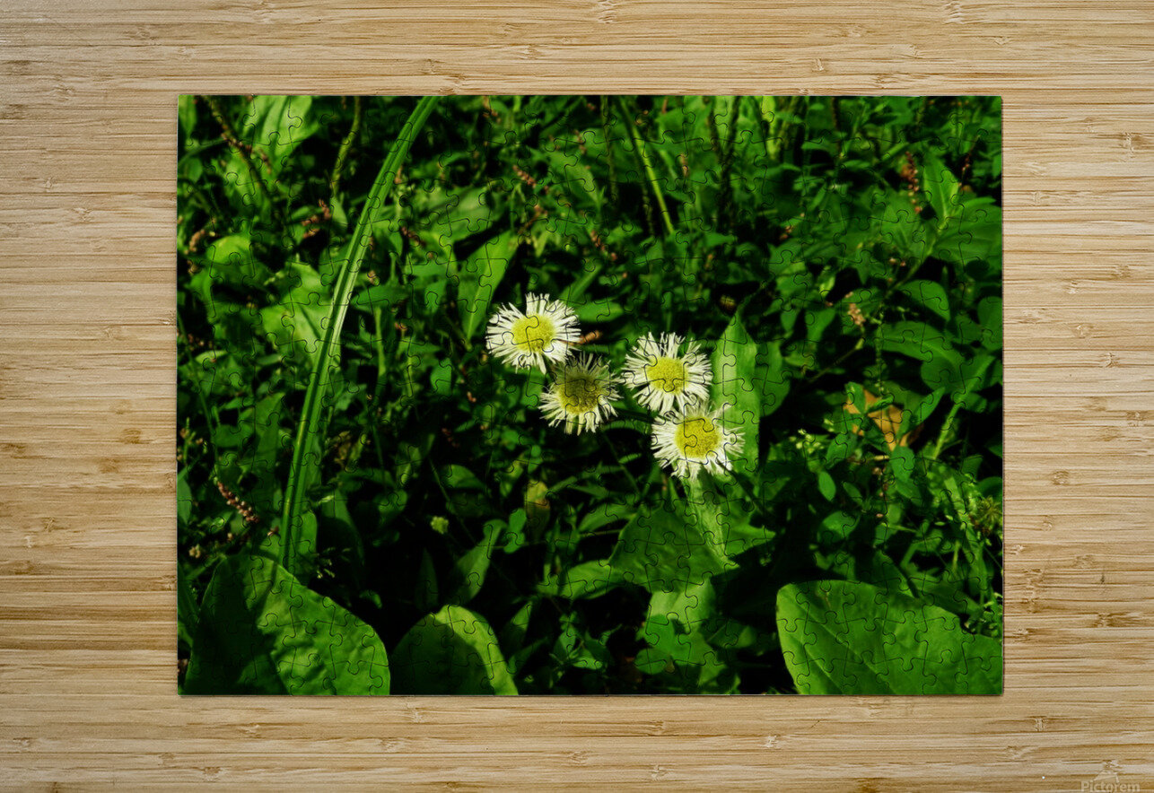 sofn-D38C2562  HD Metal print with Floating Frame on Back