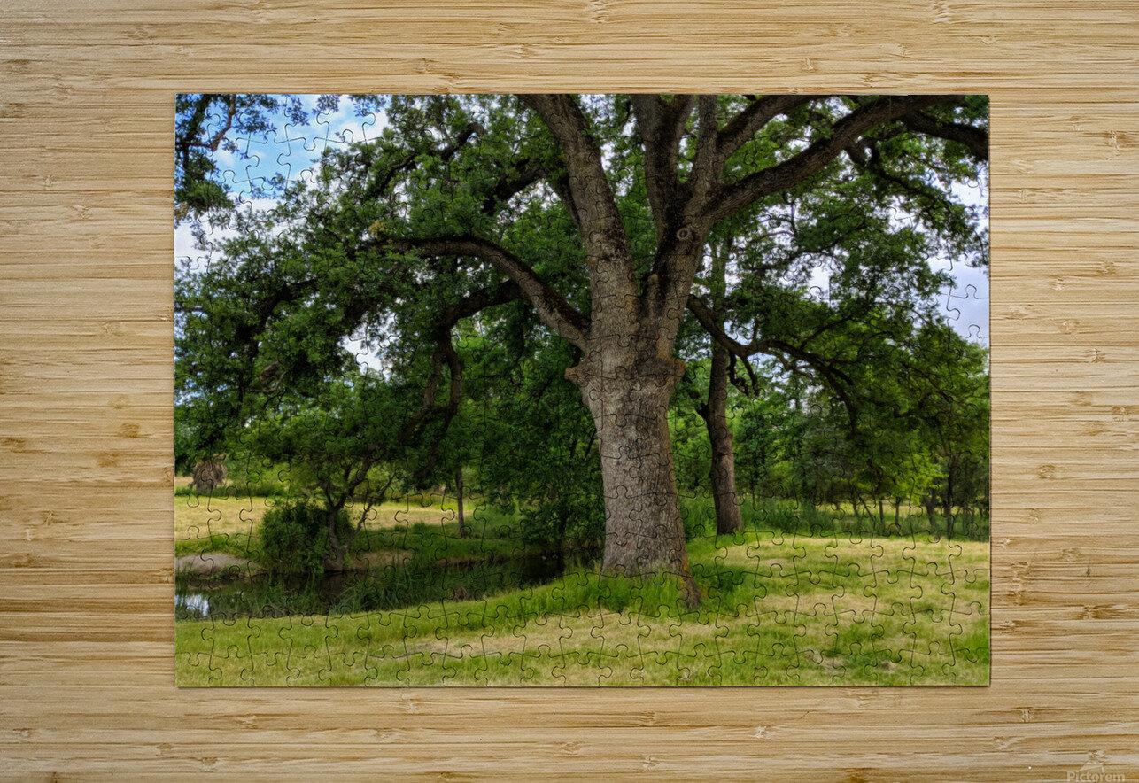 Oak Tree  HD Metal print with Floating Frame on Back