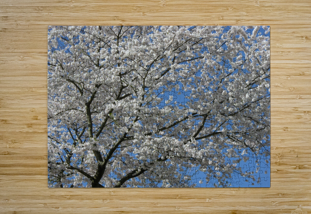 White Spring Blossoms Photograph  HD Metal print with Floating Frame on Back