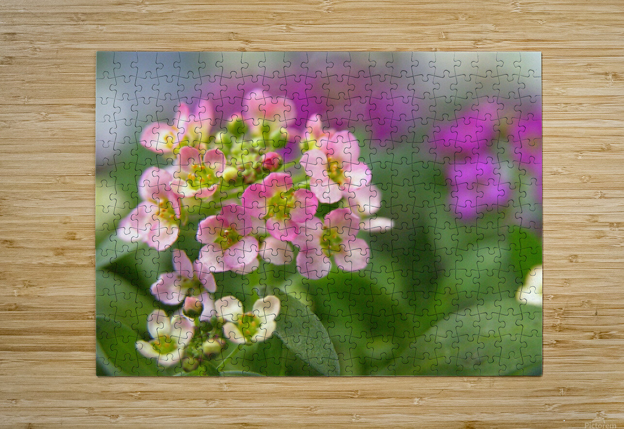 Small Pink Flowers Photography  HD Metal print with Floating Frame on Back
