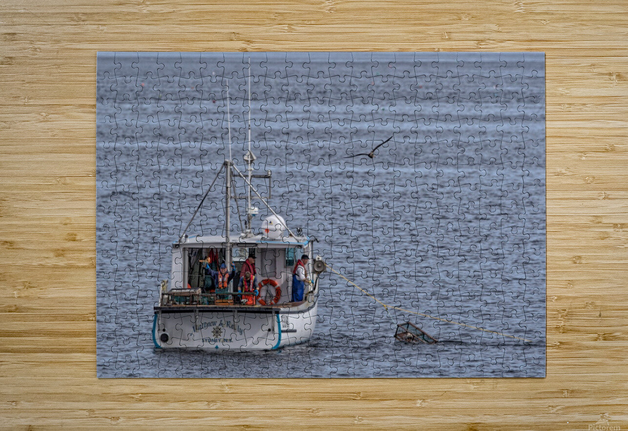 Lobster Fishing for a Living  HD Metal print with Floating Frame on Back
