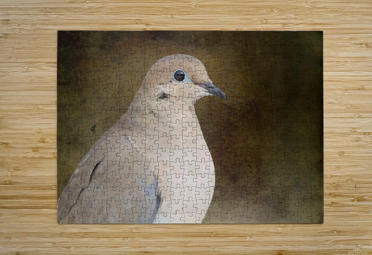 Mourning Dove  HD Metal print with Floating Frame on Back