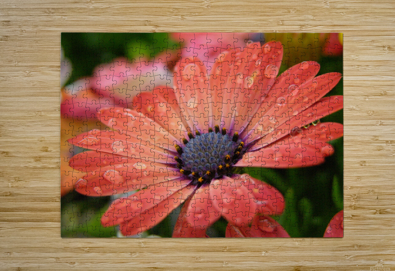 Orange Flower Covered In Rain Drops Photograph  HD Metal print with Floating Frame on Back