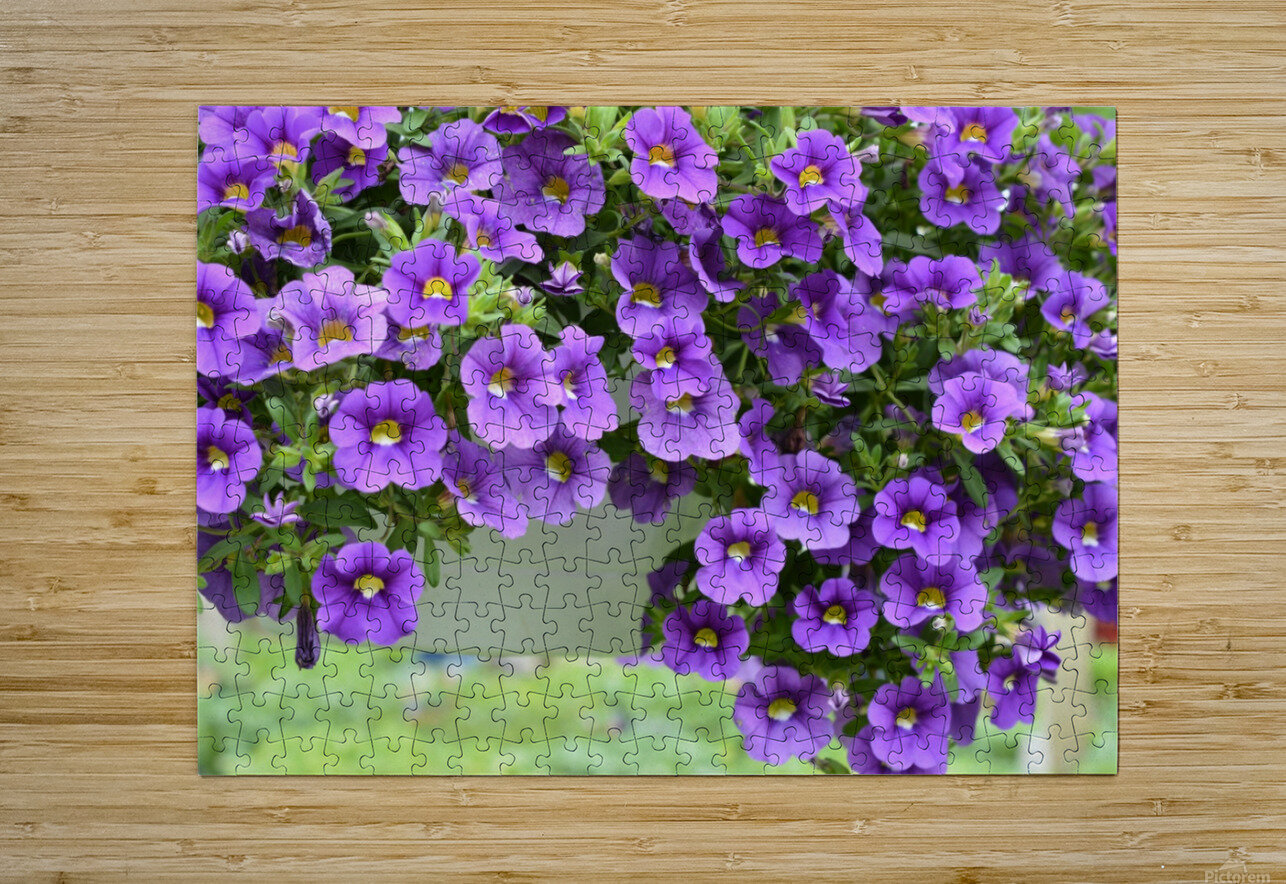 Beautiful Purple Flowers Photograph  HD Metal print with Floating Frame on Back