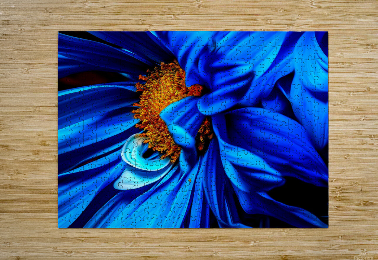 Beautiful Blue Flower_OSG  HD Metal print with Floating Frame on Back