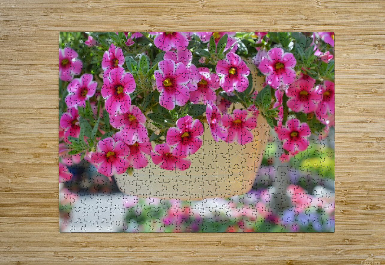 Beautiful Pink Flowers Photograph  HD Metal print with Floating Frame on Back