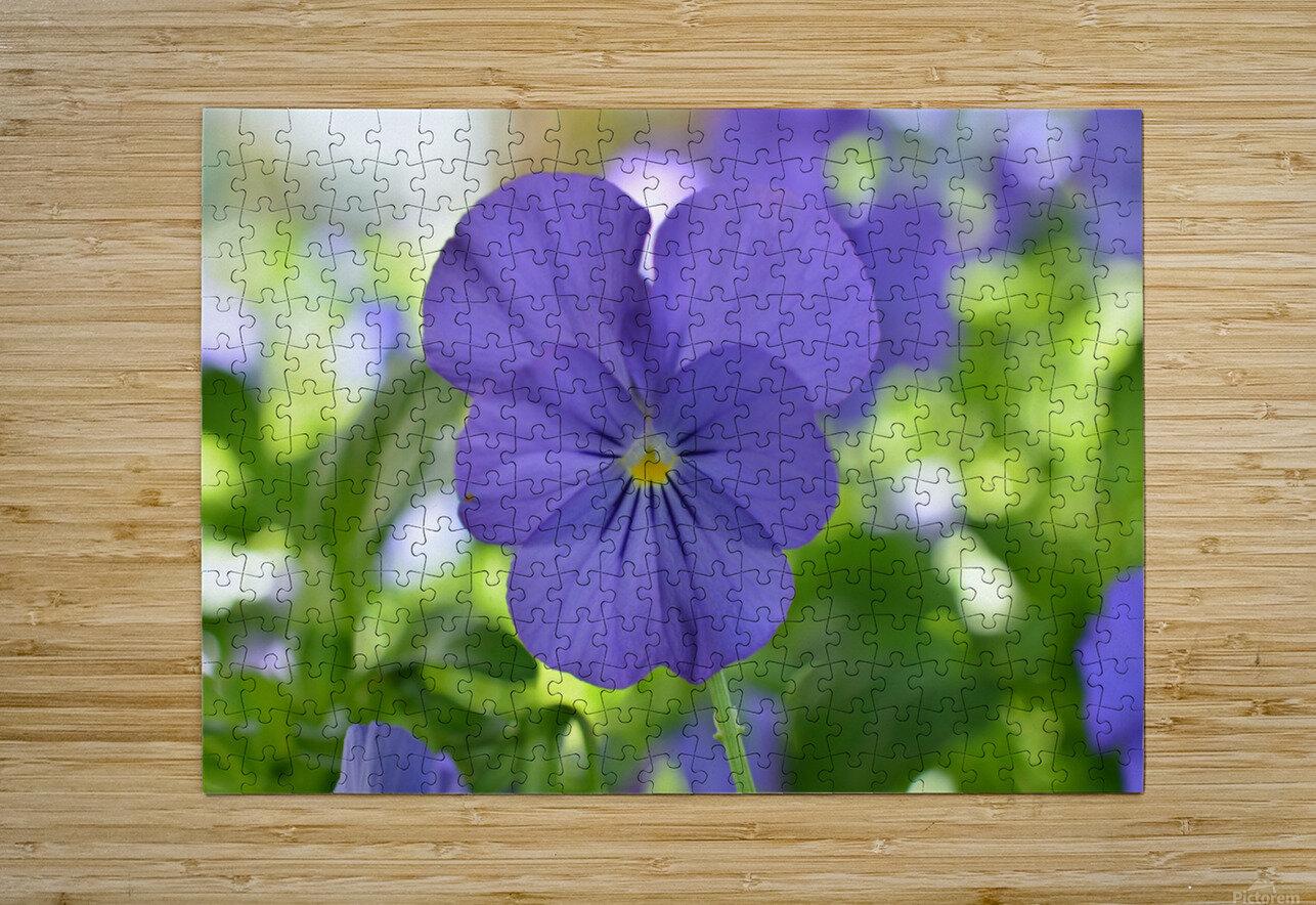 Blue Pansy Photograph  Impression métal HD avec cadre flottant sur le dos