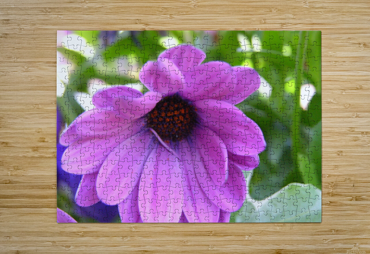 Pink Flower Photography  HD Metal print with Floating Frame on Back