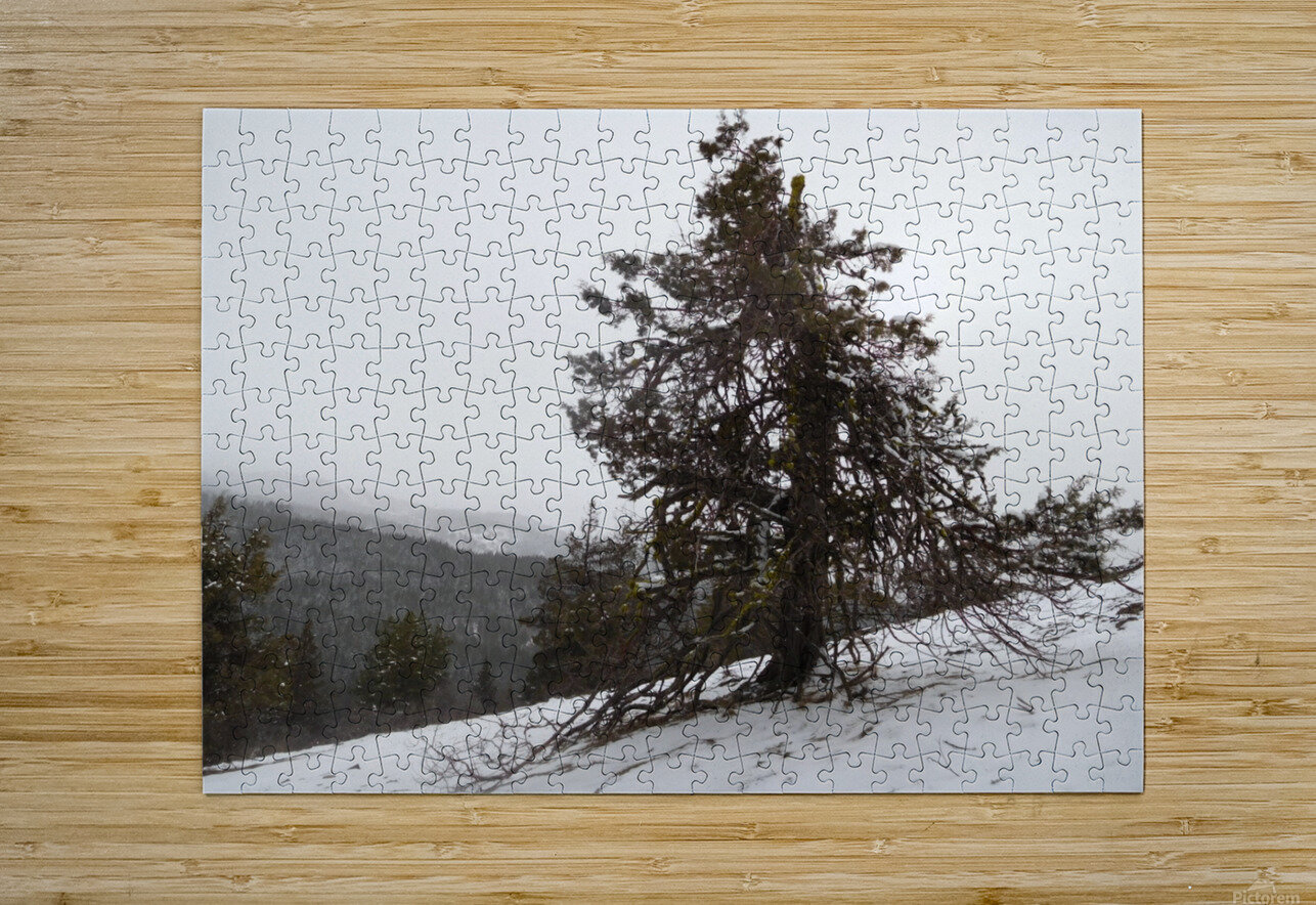 Snowy Mountain Juniper  HD Metal print with Floating Frame on Back