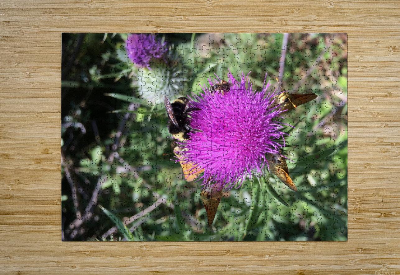 Bug Heaven  HD Metal print with Floating Frame on Back