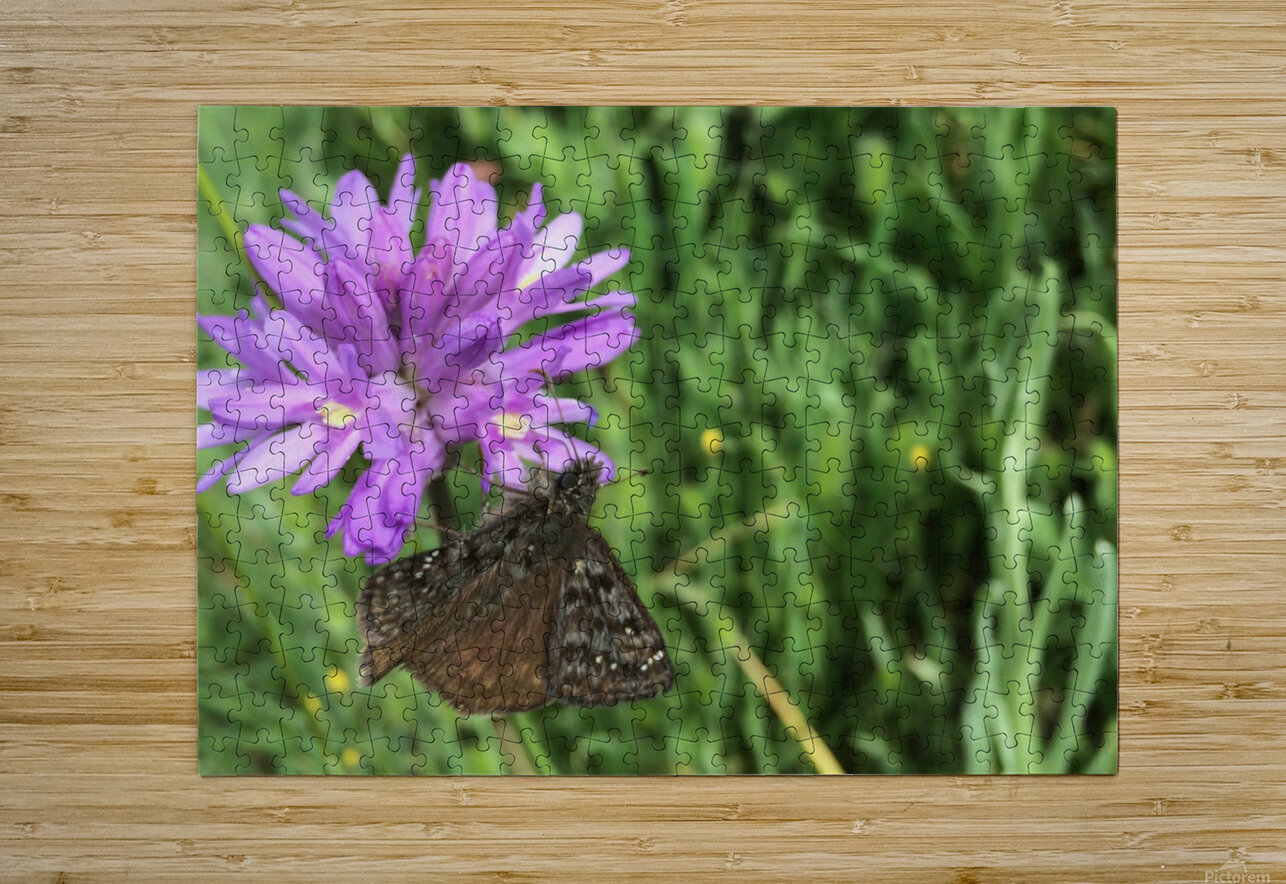 Butterfly on Wildflower  HD Metal print with Floating Frame on Back