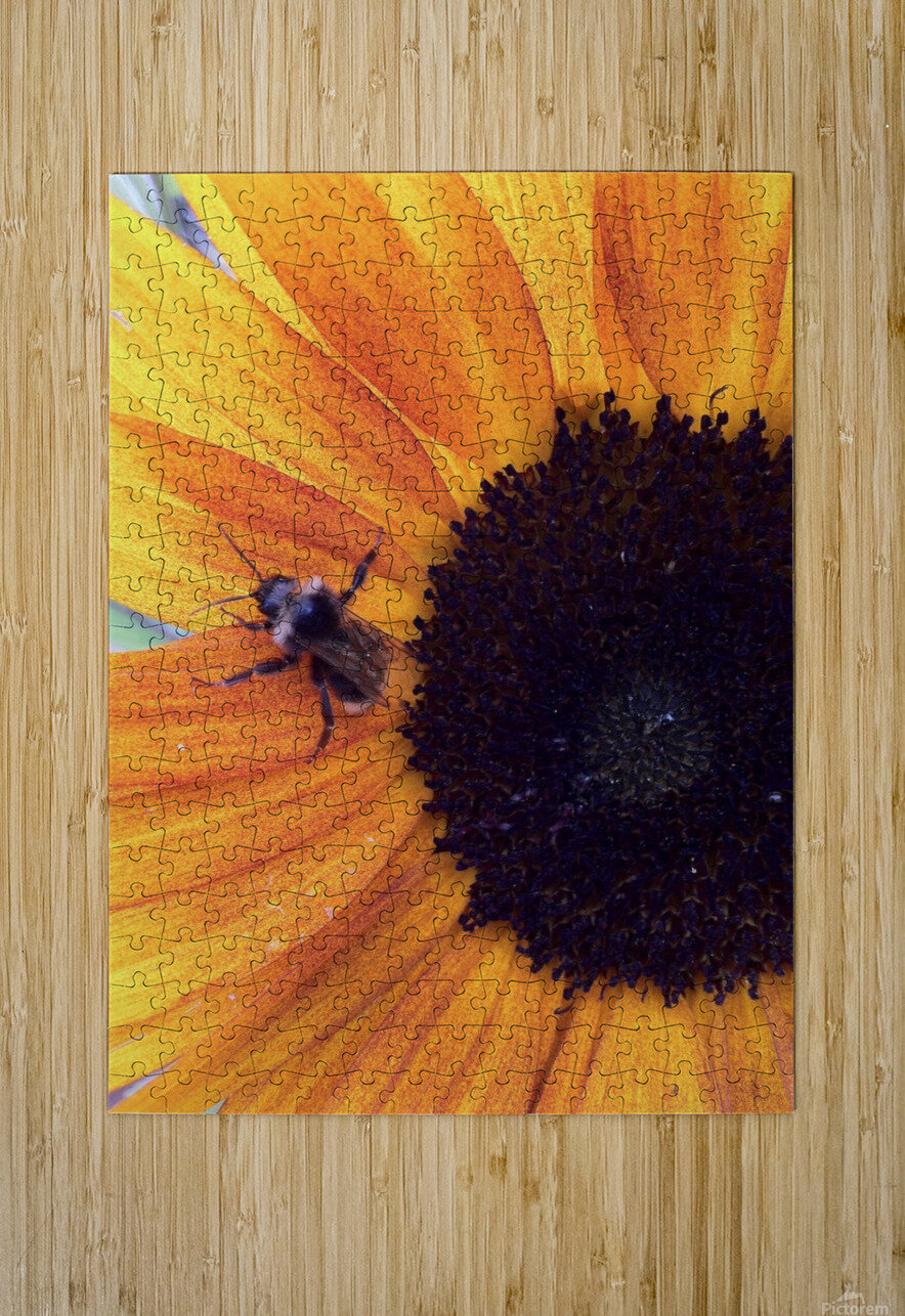 Bee on Sunflower  HD Metal print with Floating Frame on Back