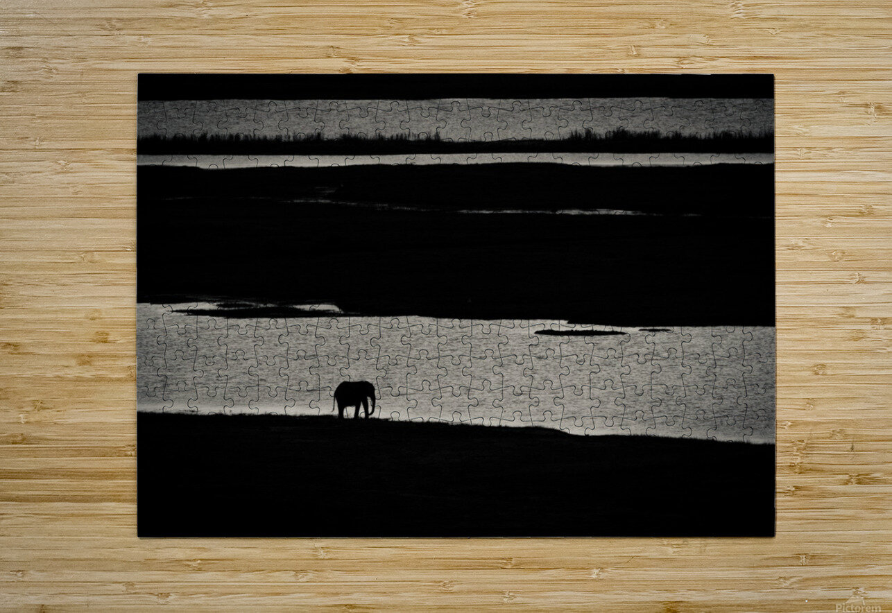 Chobe River Elephant  HD Metal print with Floating Frame on Back