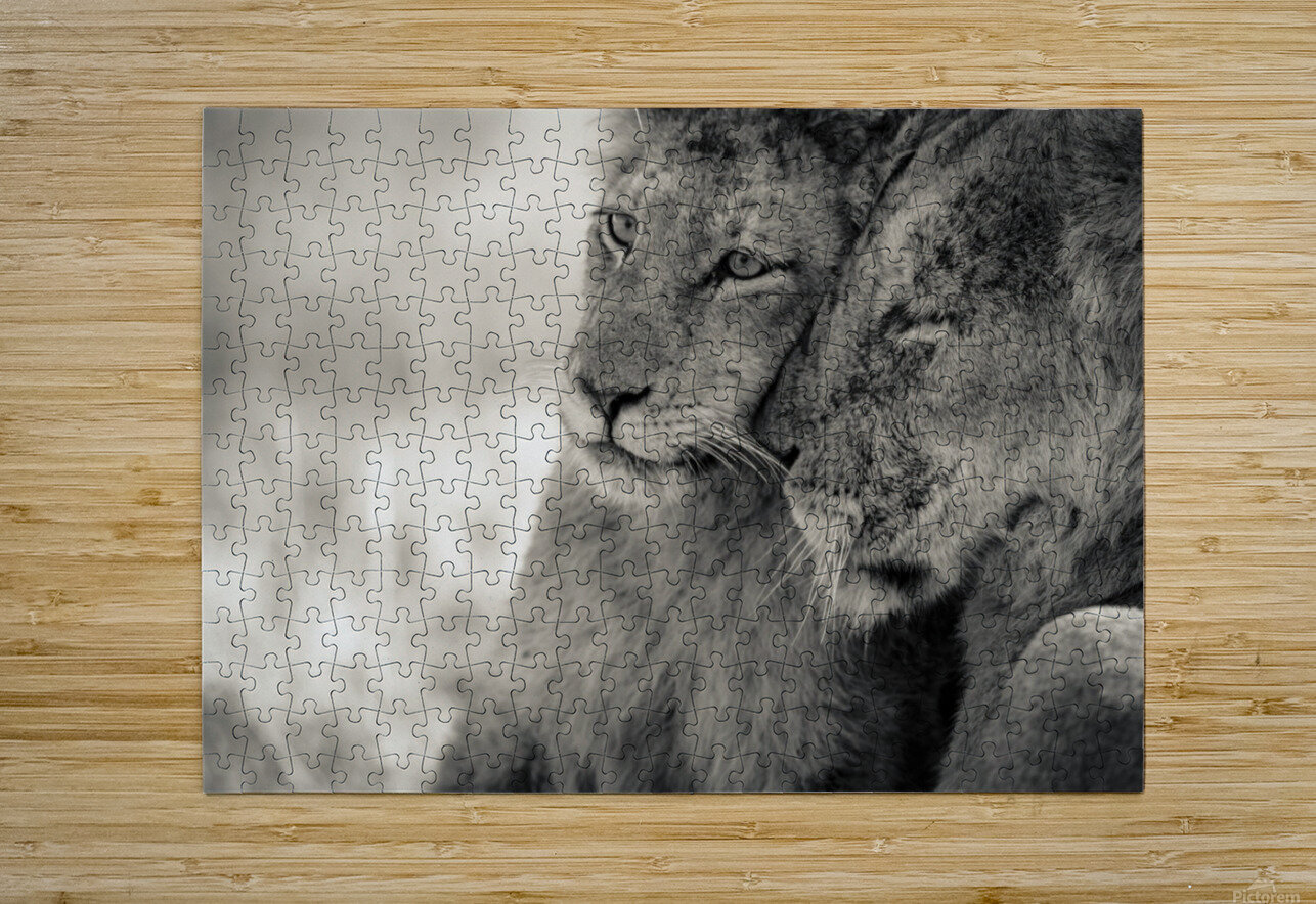 Tenderness  HD Metal print with Floating Frame on Back