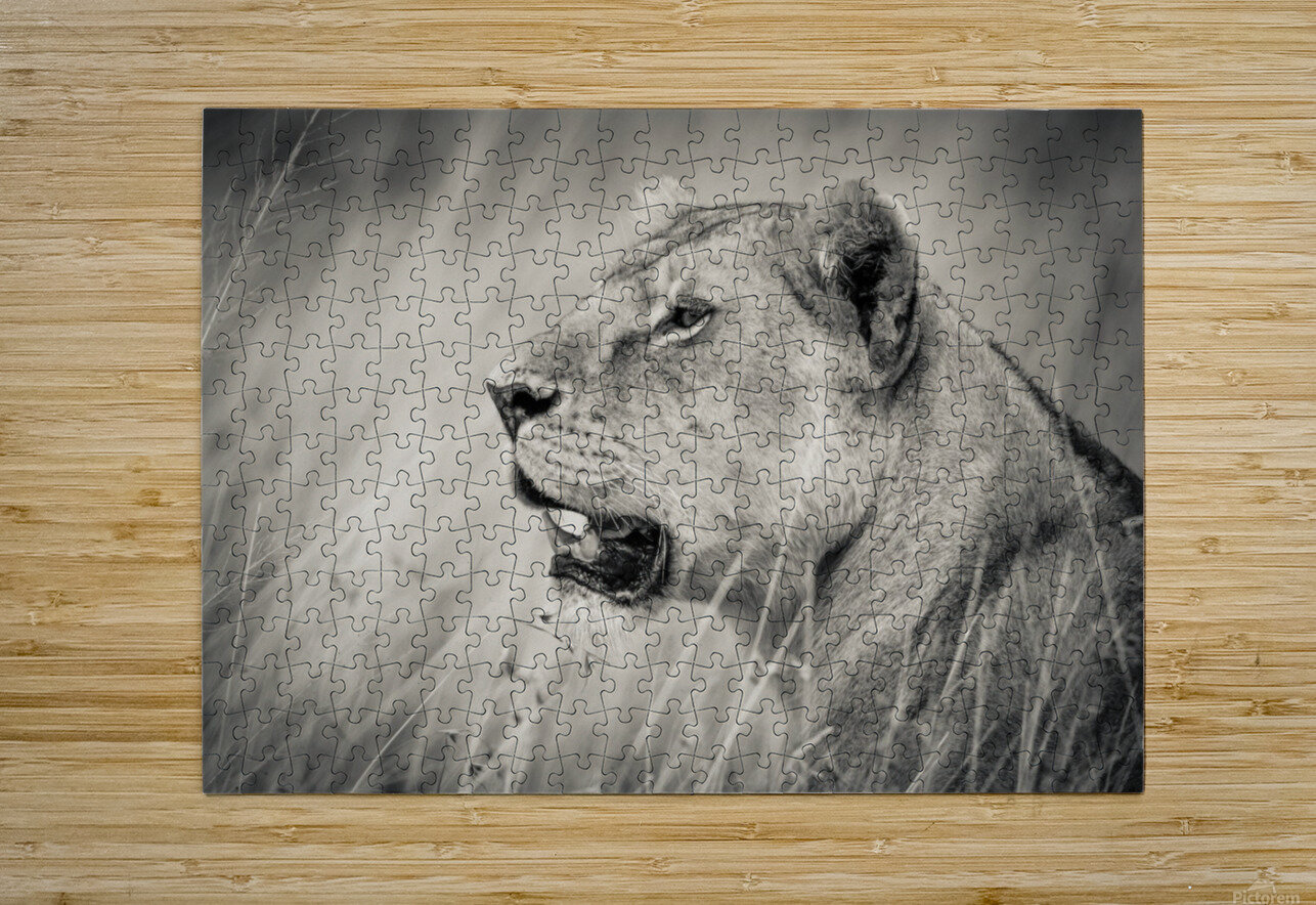 The Queen  HD Metal print with Floating Frame on Back