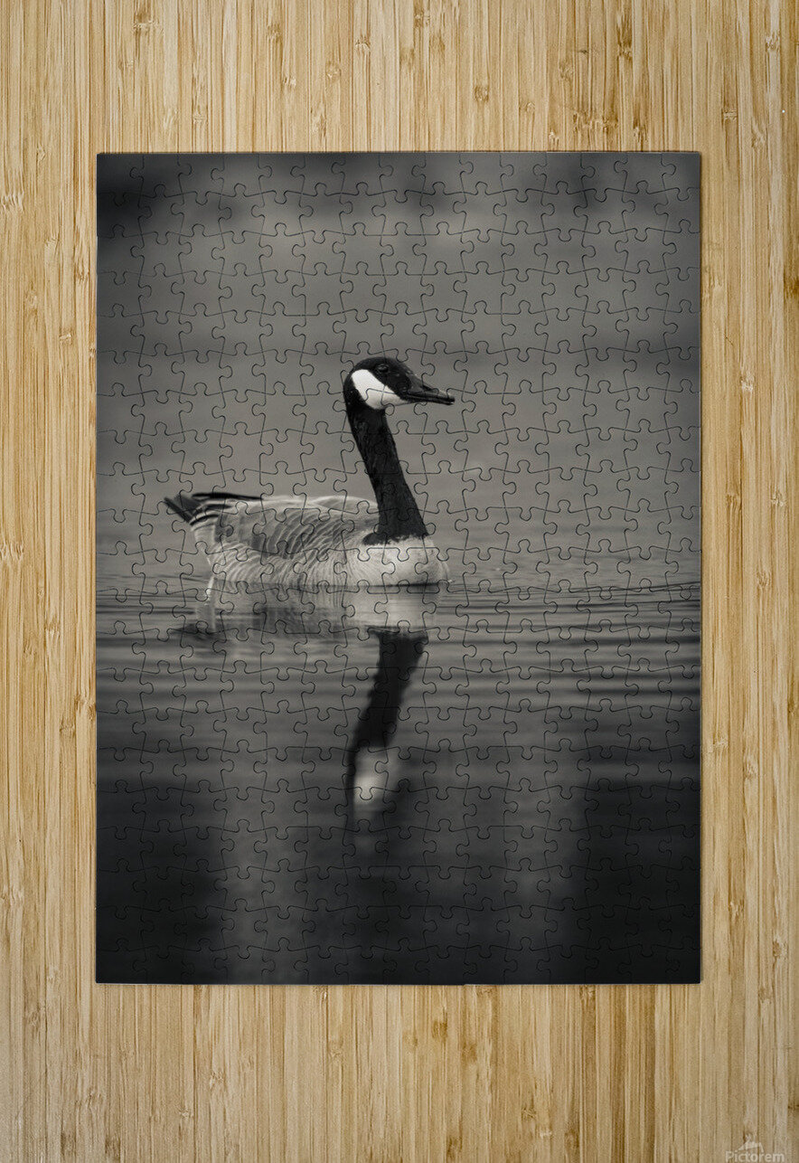 Canada Goose  HD Metal print with Floating Frame on Back