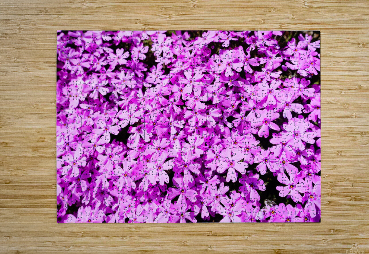 Pink Petals  HD Metal print with Floating Frame on Back