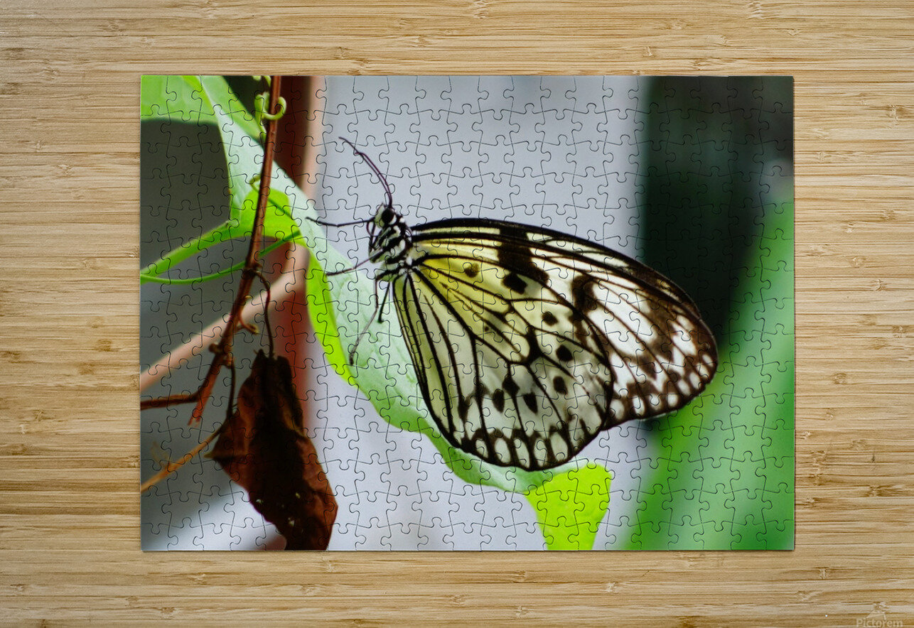 Resting Butterfly  HD Metal print with Floating Frame on Back