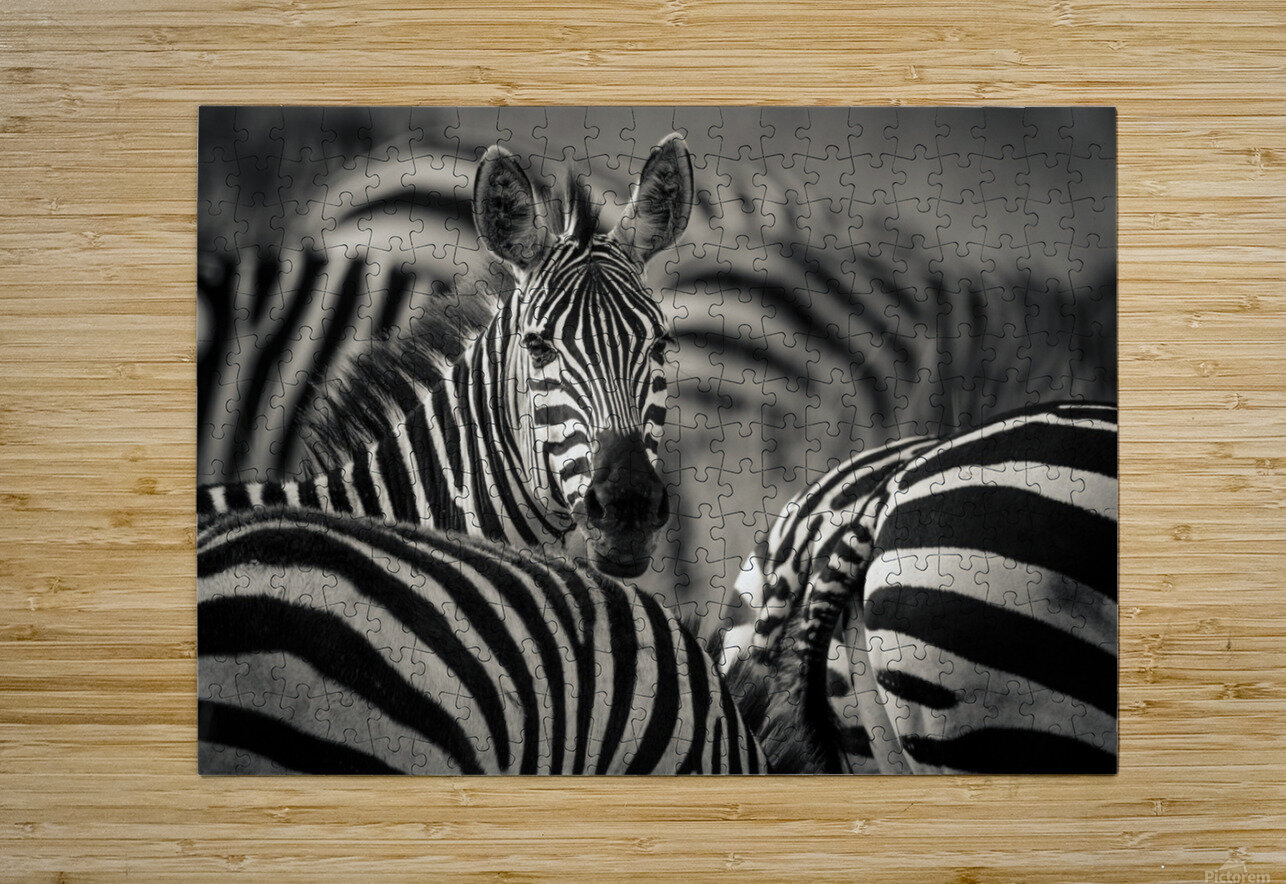 Who is there by www.jadupontphoto.com  HD Metal print with Floating Frame on Back