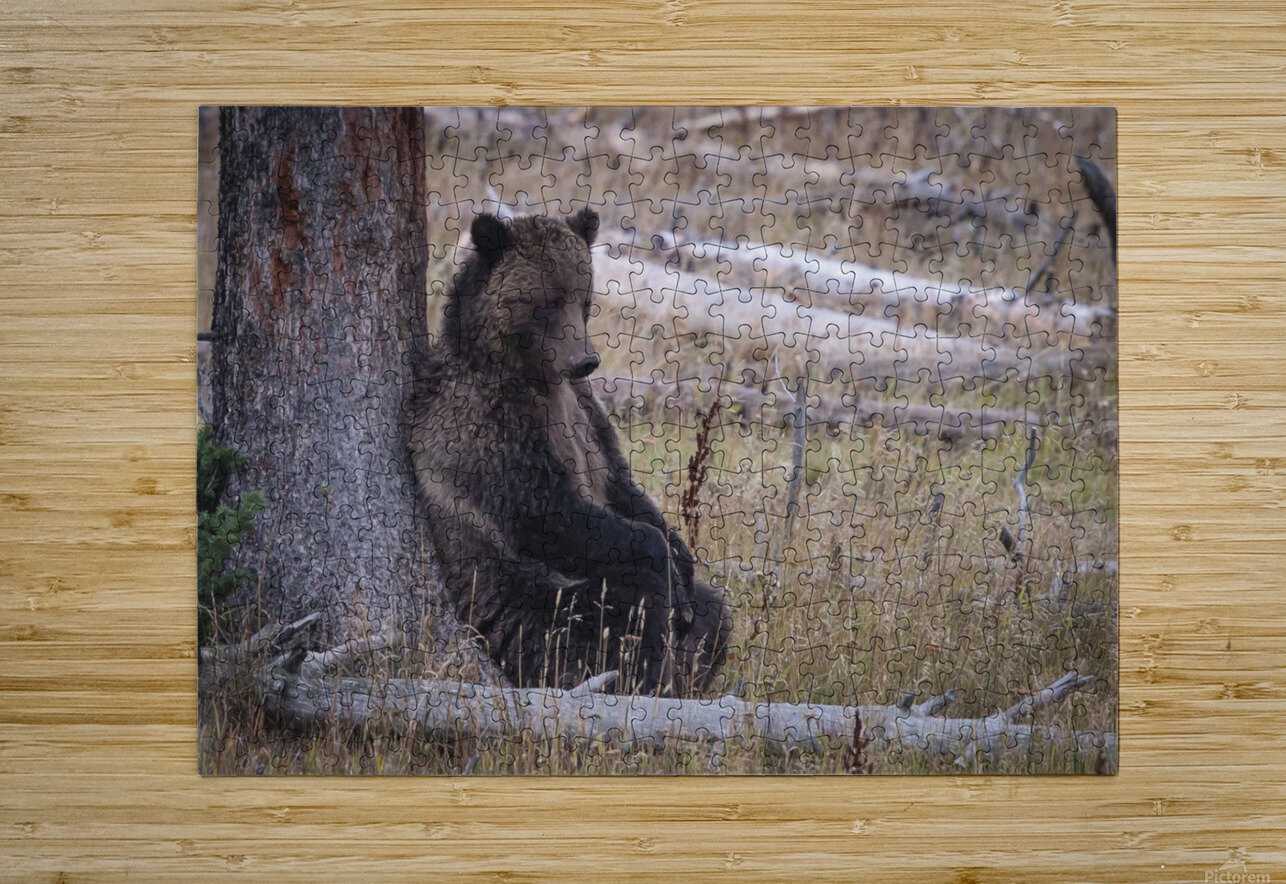 _T8C3739 Modifier  HD Metal print with Floating Frame on Back