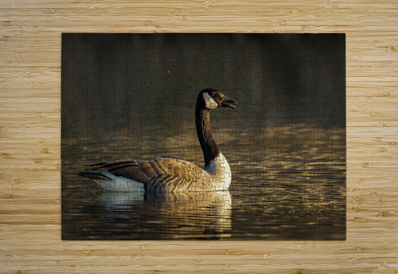 _T8C4044  HD Metal print with Floating Frame on Back
