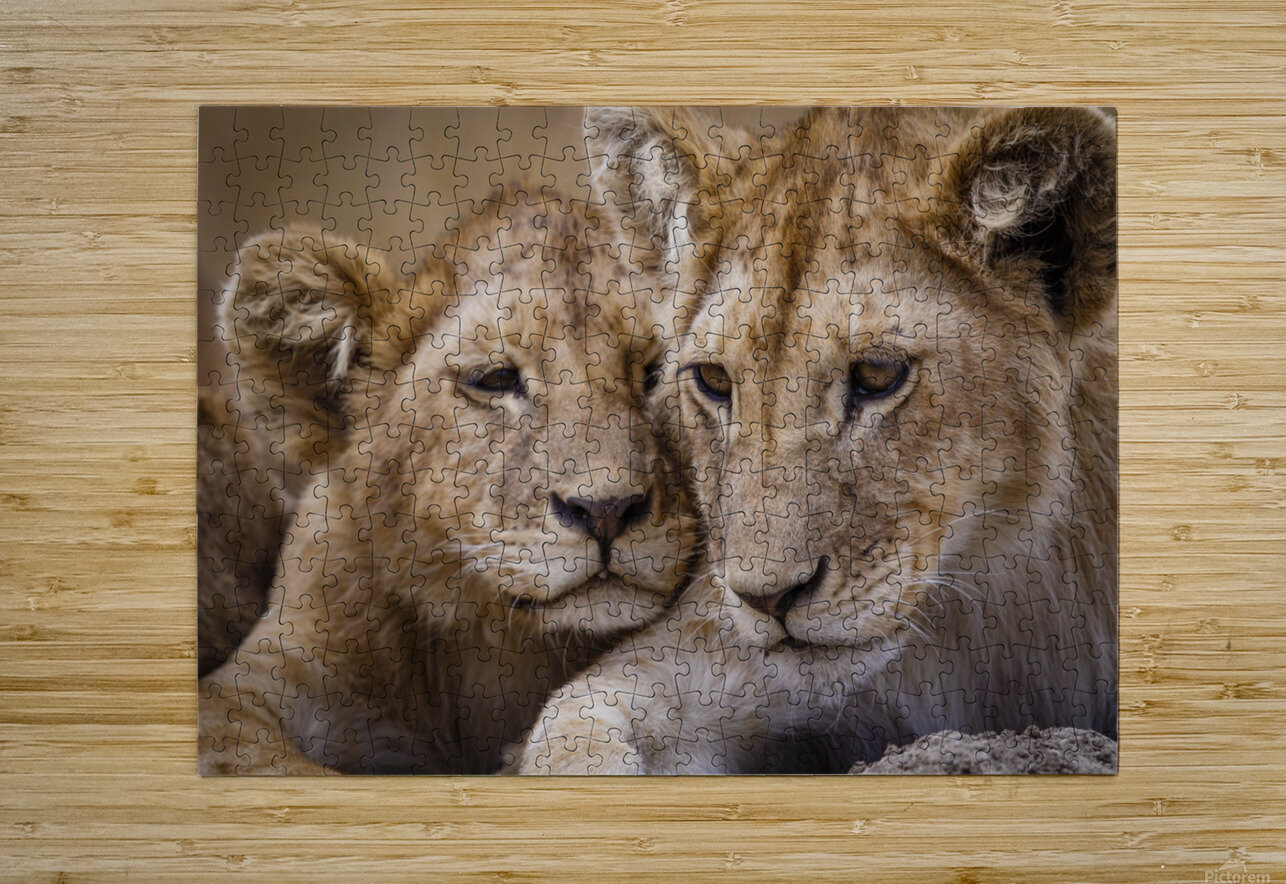 Brothers & Sisters  HD Metal print with Floating Frame on Back