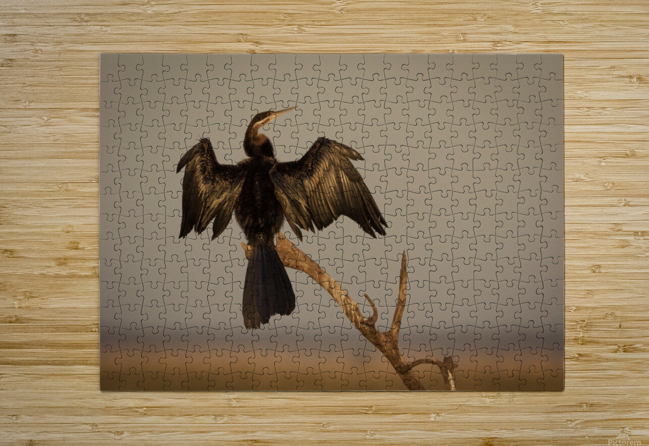 All Wings Open  HD Metal print with Floating Frame on Back