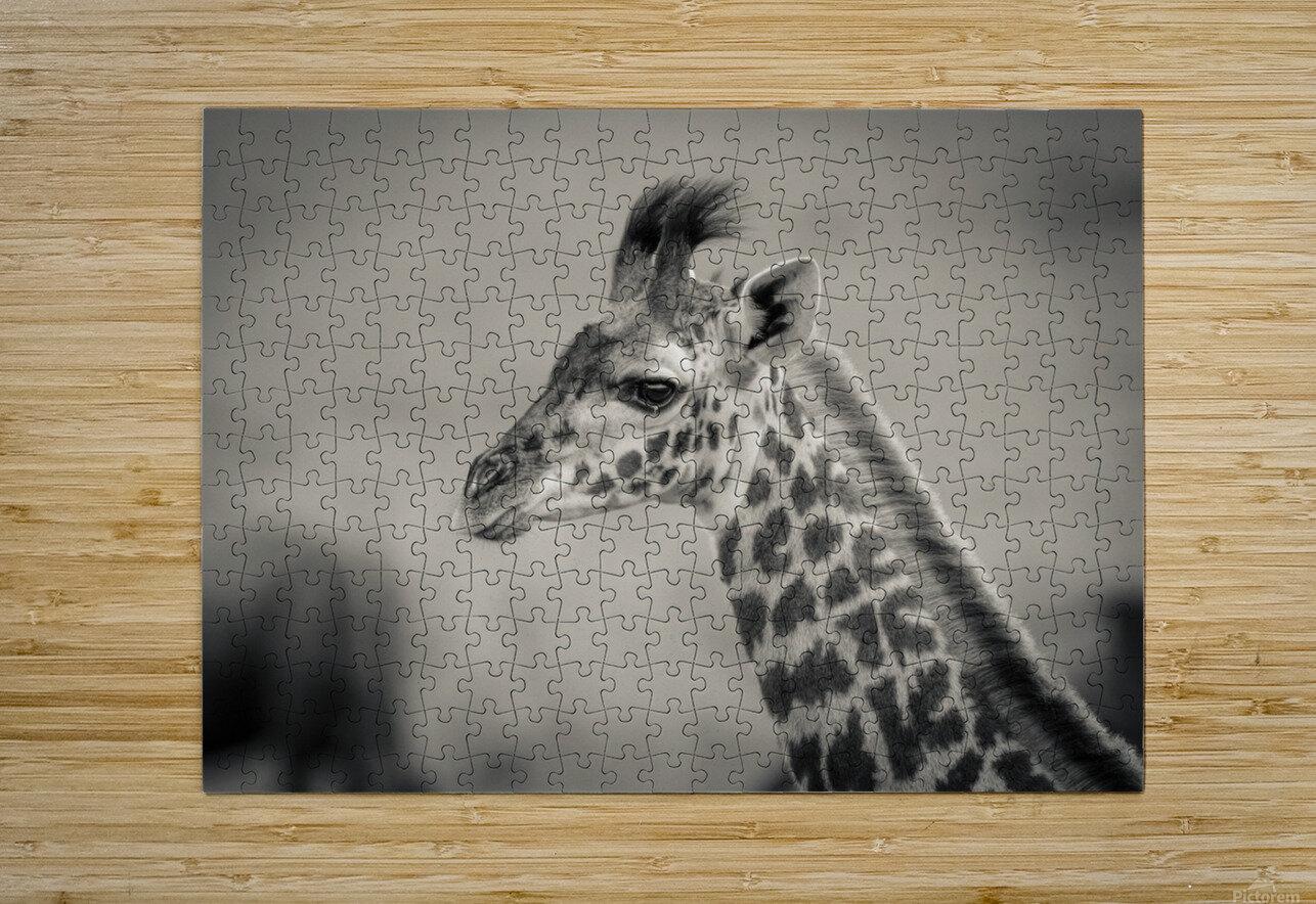 Girafe Calve  HD Metal print with Floating Frame on Back